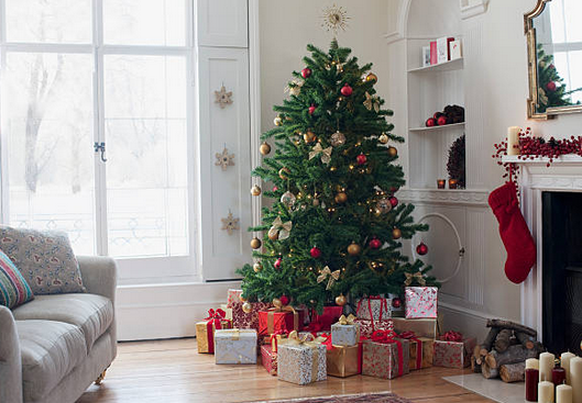 Quels sont les différents types de sapins de Noël ?